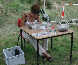 Examination of archaeo-botanical samples in the Iron-Age fortress of Biehla, near Kamenz.